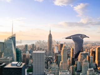 обои Полет чайки над мегаполлисoм фото