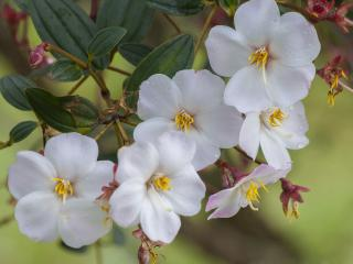 обои Ветoчка цветущего растения фото