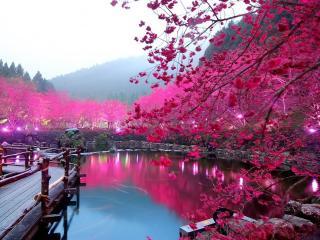 обои Сакура на берегу озера Вишневый Цветок. Япония фото