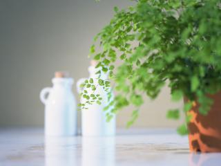 обои Растение в горшке и два белых кувшина на столе фото