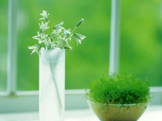 обои Растение в горшке и ростки в воде,   на подоконнике фото
