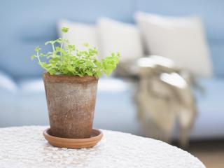 обои Растение в горшке на столике фото