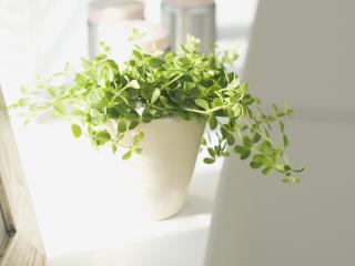 обои Растение в белом горшке и рамка для фото,   на подоконнике фото