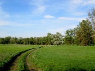 обои Просёлочная дорога через поле фото