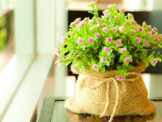 обои Цветущее растение в мешочке фото