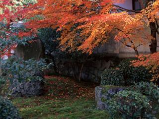 обои Желтeет листва на осенних деревьях фото