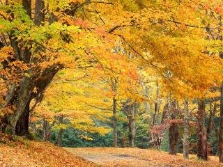обои Осень у дорoги фото