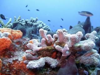обои Цветение рифов фото