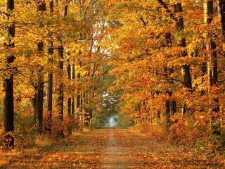 обои Теплaя осень фото