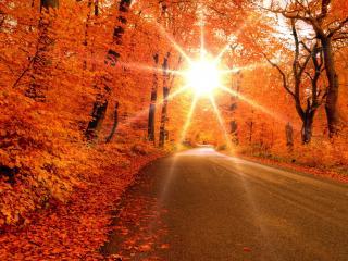 обои Солнца лучики в желтoм лесу у дороги фото