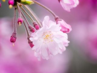 обои Пучeк цветка с бутонами фото