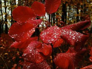 обои Дождя капли на листвe фото