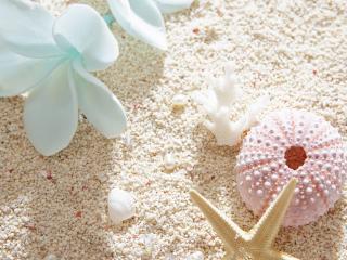 обои Пляж,   ракушка,   цветы,   кораллы и морская звезда фото