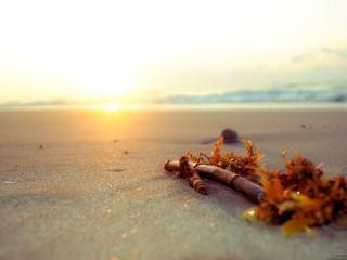 обои Пляж,   ветка дерева на песке фото