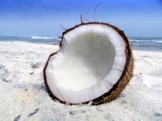 обои Пляж,   кокос на песке крупным планом фото