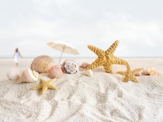 обои Пляж,   морские звезды и ракушки на пригорке песка фото