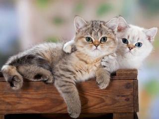 обои Два недовольных котёнка фото