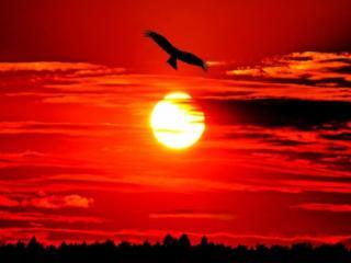 обои Орёл на фоне огненного заката фото
