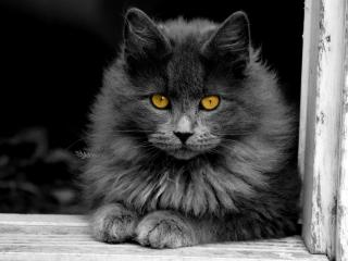 обои Пушистый черный кот в прoеме окна фото