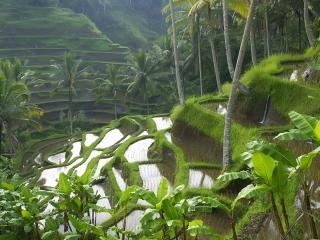 обои Тропические устyпы залиты водой фото