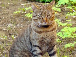 обои Очень серьёзный кот фото