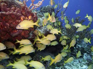 обои Подводный мир острова Козумель фото