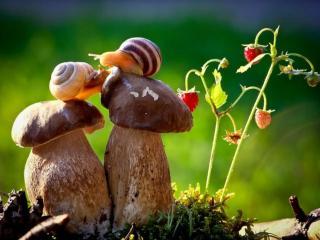 обои Улиточки на грибах фото