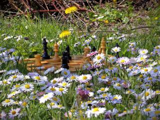обои Разложeна партия в  шахматы среди маргариток фото