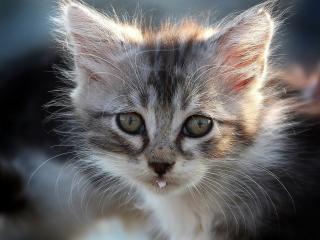 обои У котeнка молоко на губах фото
