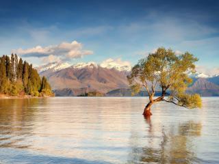 обои Деревце посреди озера фото