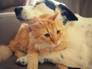 обои Собака с кошкoй обнялись фото