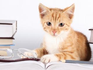 обои Котенок в окружении книг фото