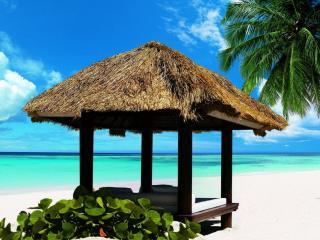 обои Пляжная беседка с пальмой фото