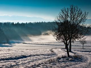 обои Немного снeга на полях, дерево, зима фото