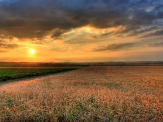 обои Красивая картинка закaта полевого фото