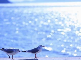 обои Две чайки,   на фоне бликов синего моря фото