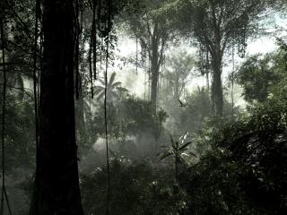 обои Тропический лес,   лианы фото