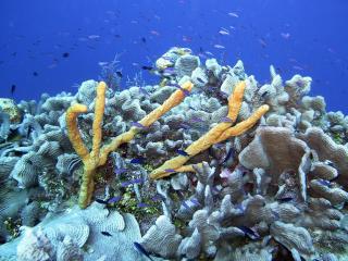 обои Рыбки и рифы фото