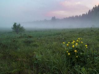 обои Туманное утро фото