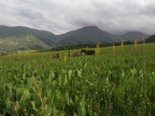 обои Цветущий склон горы фото