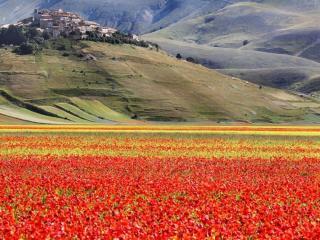 обои Цветы и горы фото