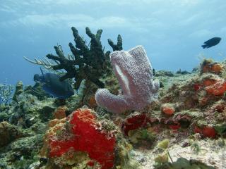 обои Подводные рифы на камнях фото