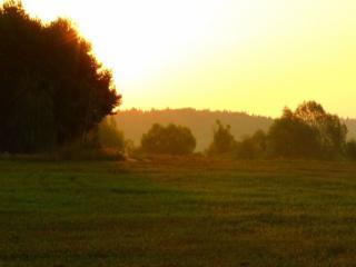 обои Утро летнее фото