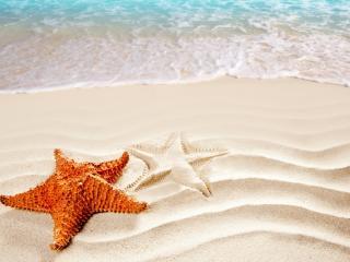 обои Пляж,   морская звезда и ее отпечаток на песке фото