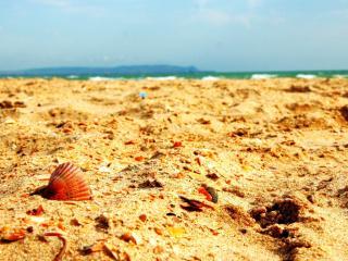 обои Пляж,   песок и ракушки,   макро фото