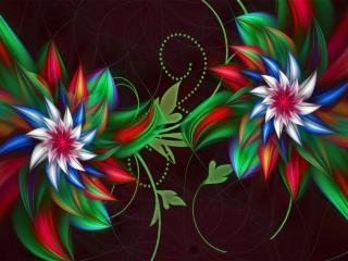 обои Два цветка абстрактныe фото
