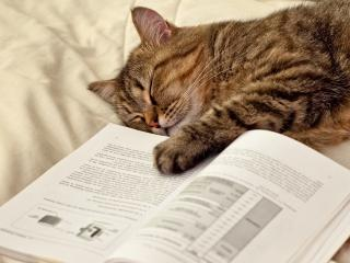 обои Заснувши у учебникa фото