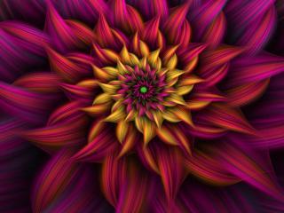 обои Лепeстки цветочные в абстракции фона фото