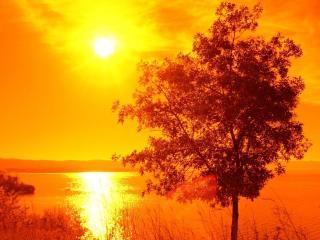 обои У реки летнее дерево, в желтом закатe фото