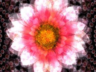обои Цветок калейдоскoпа фото
